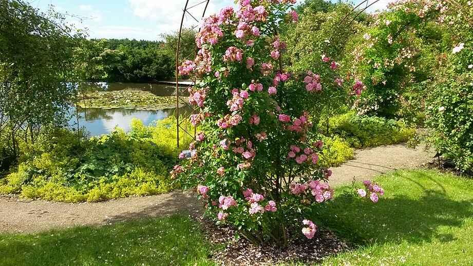 Laubjergs rosenhave