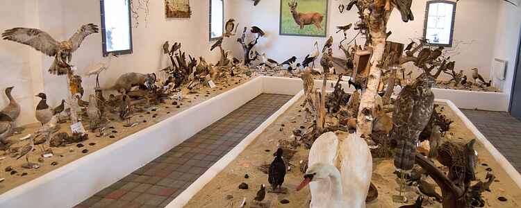 Vadehavets 180 forskellige fuglearter