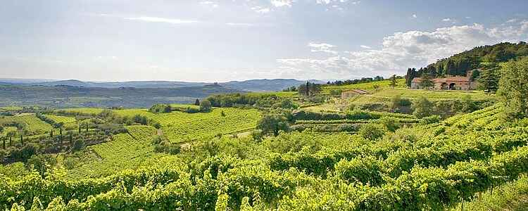 Italiensk vin for begyndere