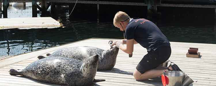 Fjord&Bælt: Kom helt tæt på dyrelivet i de danske farvande
