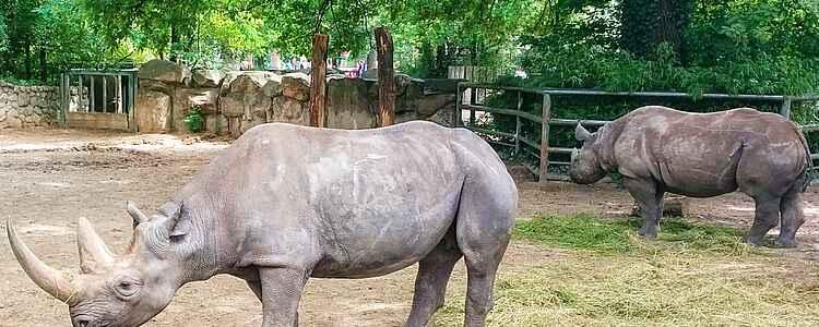 Berlin Zoo - en oplevelse for hele familien