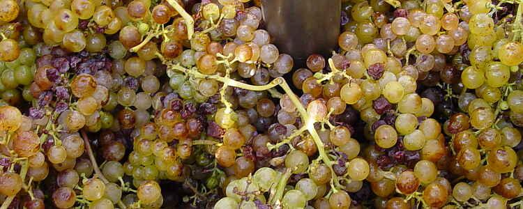 Stjernestunder blandt Heraults vinmarker