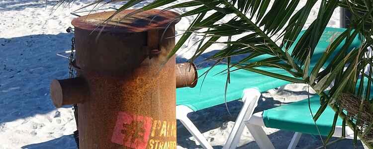 Den nordligste palmestrand å finne