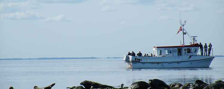 Ferie i sommerhus på Læsø: De 5 bedste seværdigheder og oplevelser