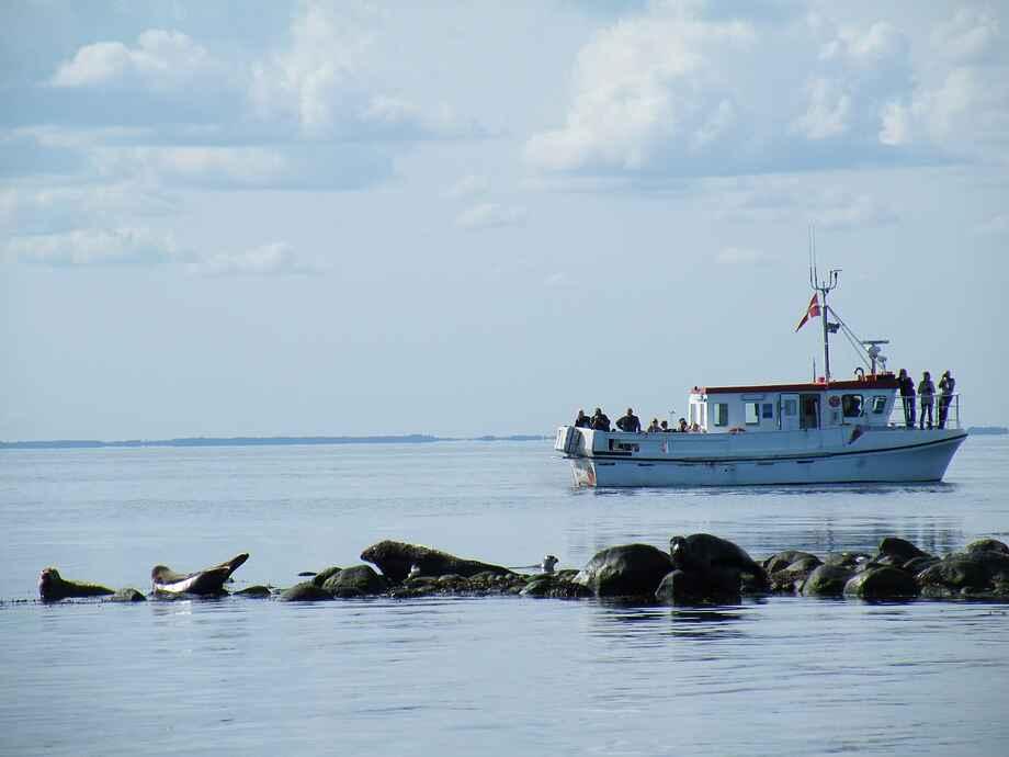 Læsø sejltur sæler Seadog